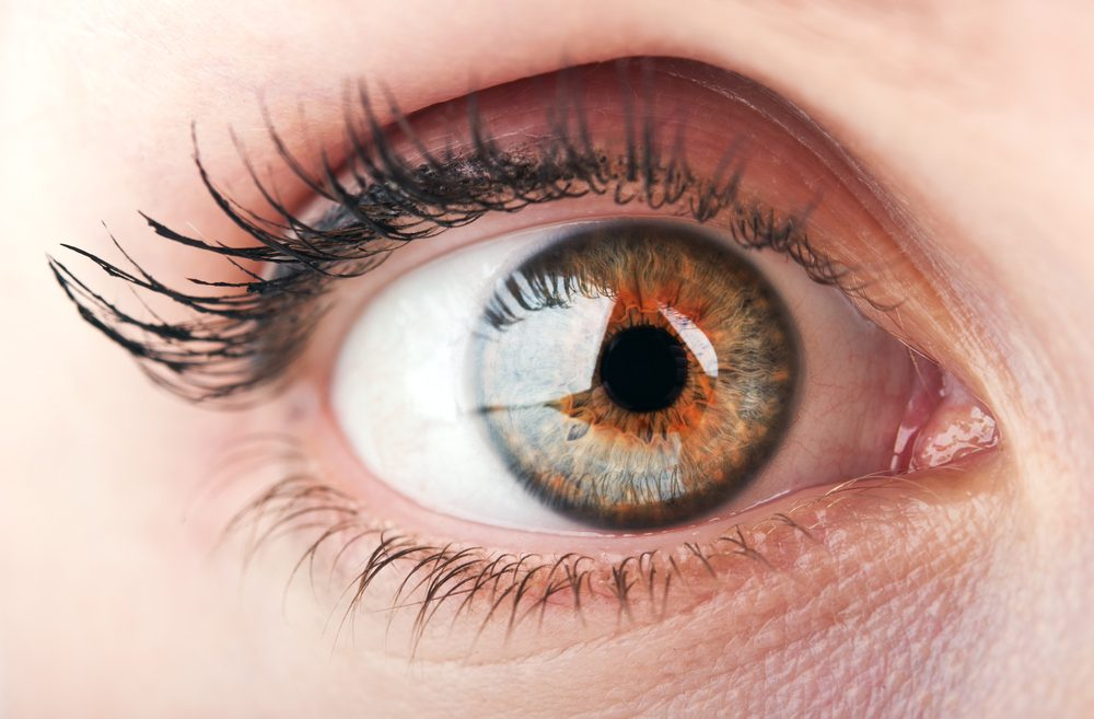 rogówka oka