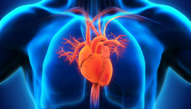 Serce człowieka budowa i funkcjonowanie